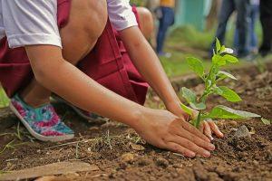 Anpflanzen Gartenarbeit